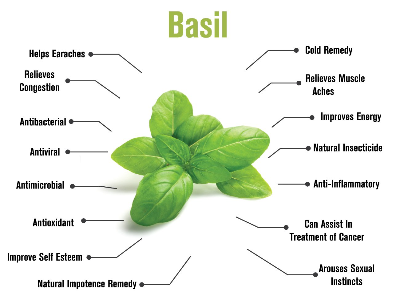 092517 Basil infographic