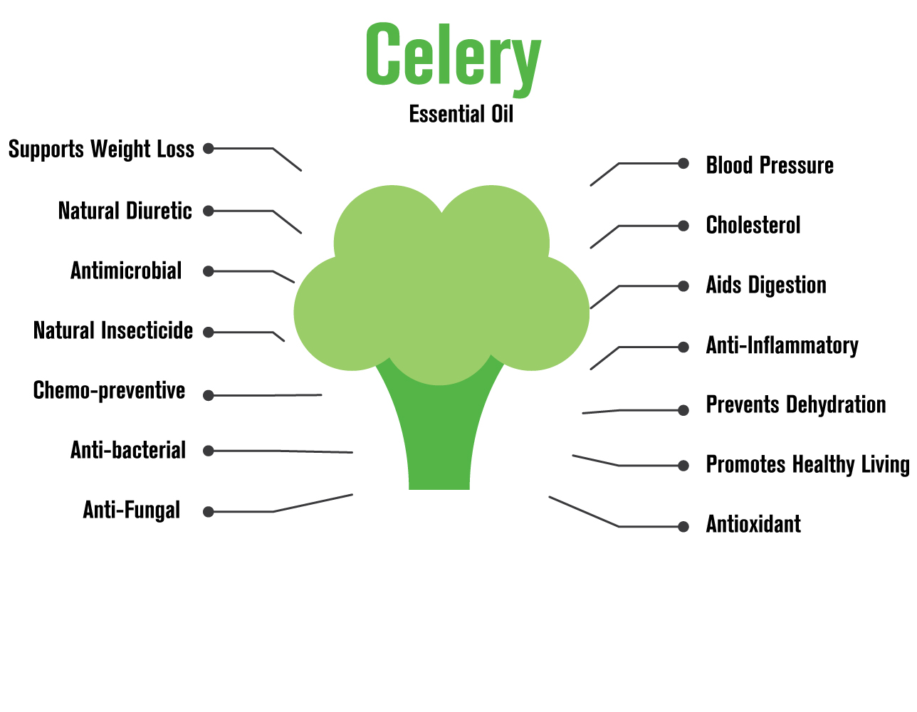 100517 Celery essential oil infographic