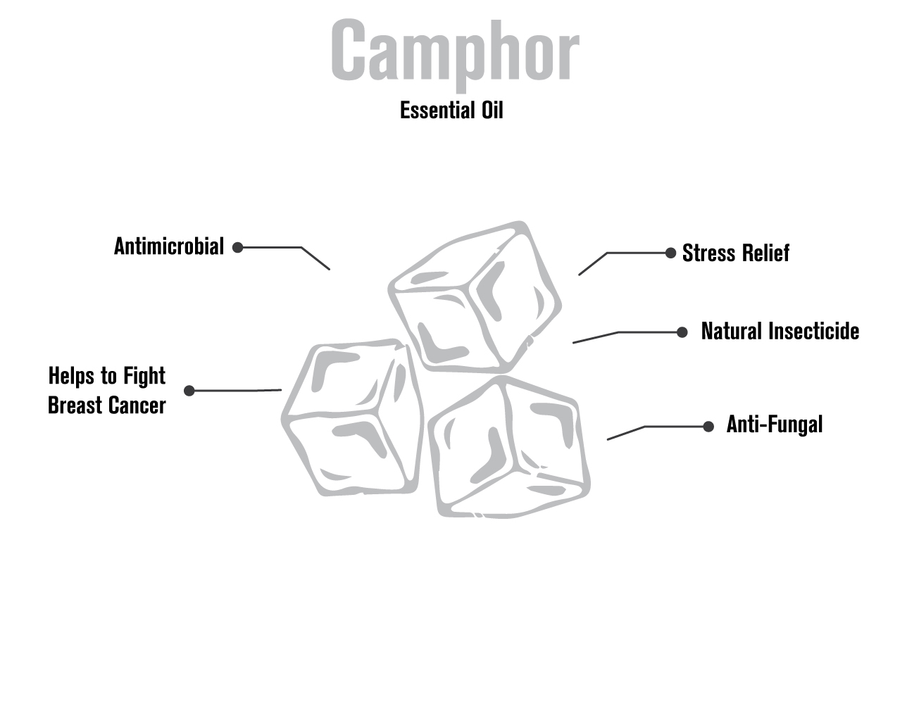 100517 camphor infographic