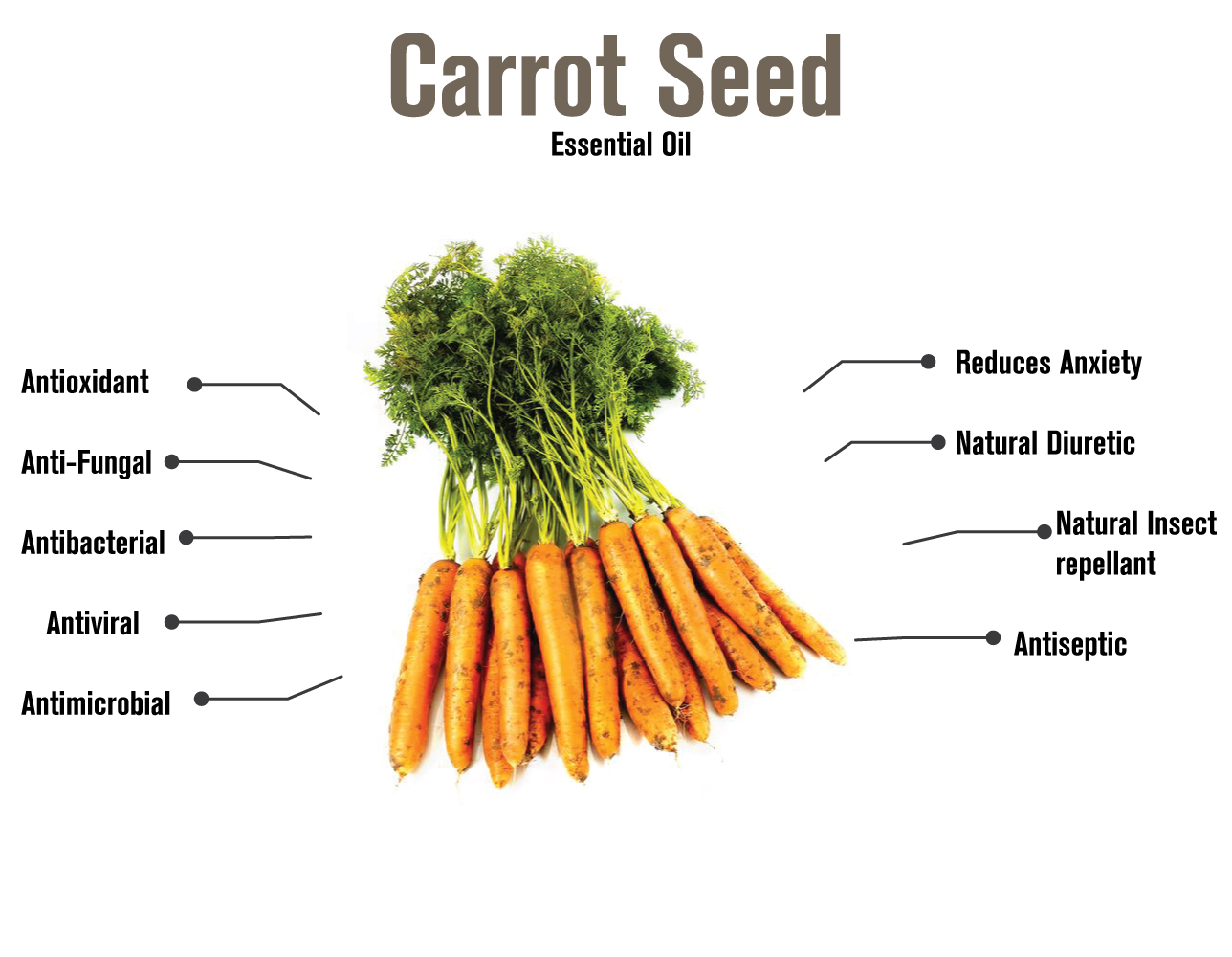 100517 carrot essential oil infographic