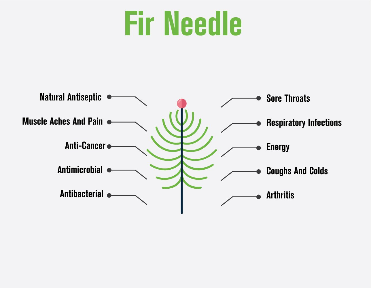 100917 Fir Needle essential oil infographic