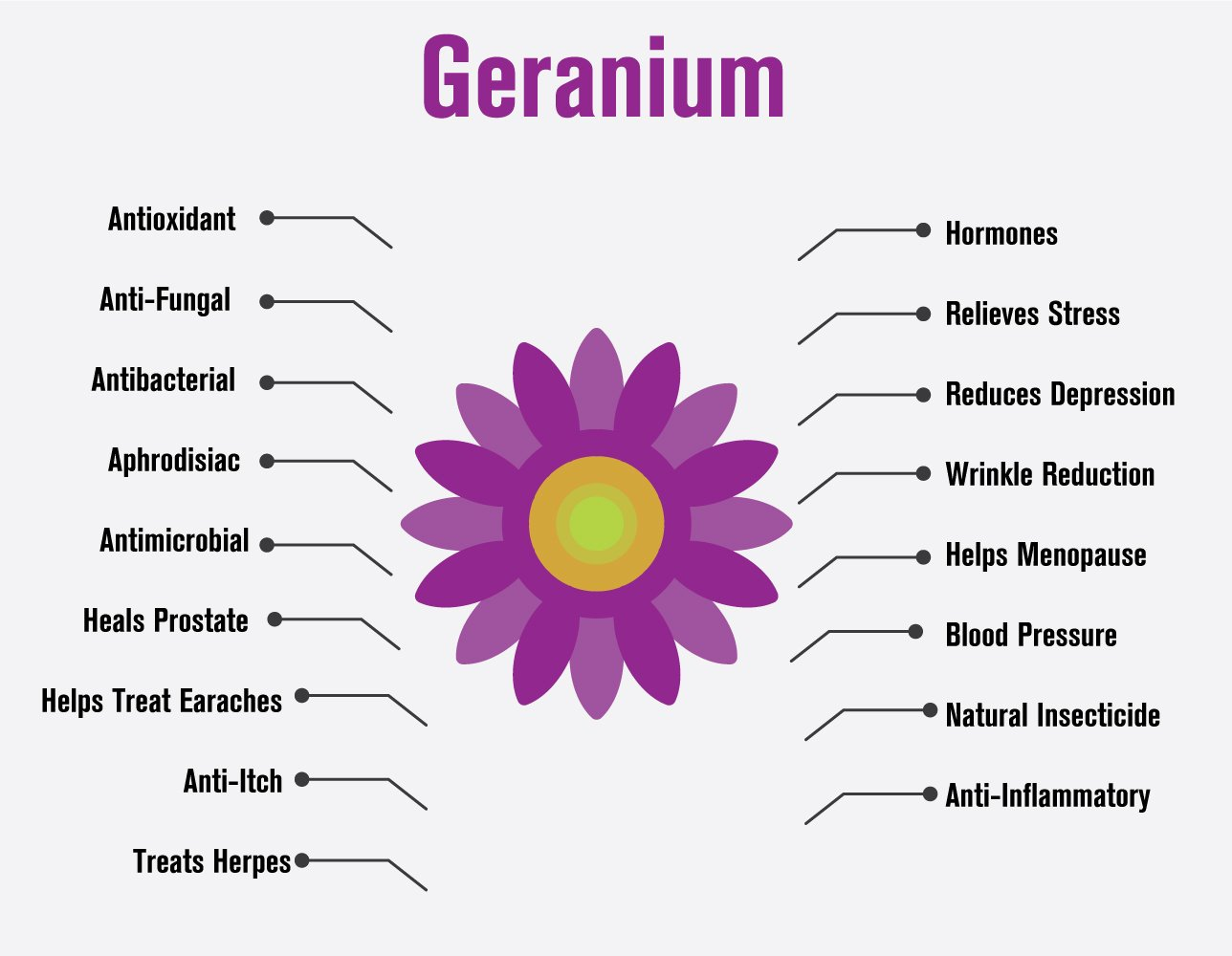 100917 Geranium essential oil infographic